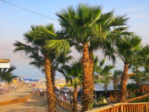 Israel-H-Dead-Sea-Palme