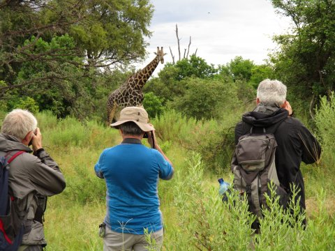 Botswana-Walking-Safari-Okavango