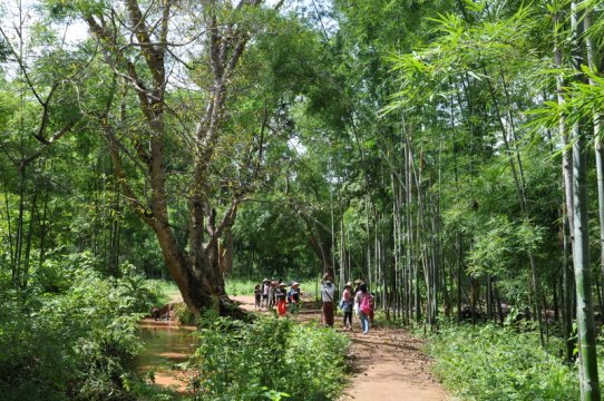 Bambuswald am Inle See