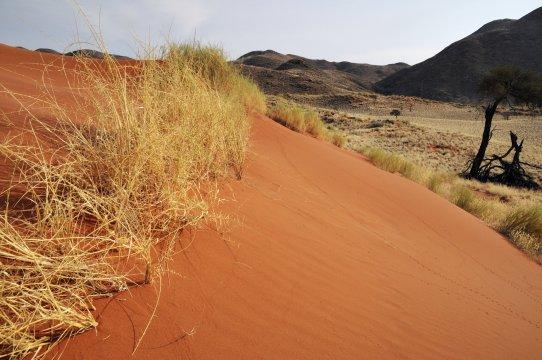Duene im NamibRand Gebiet_2