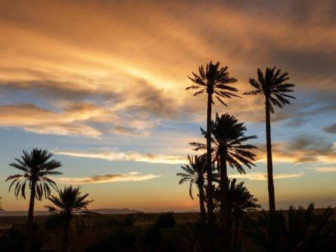 Palmenpracht im Abendlicht