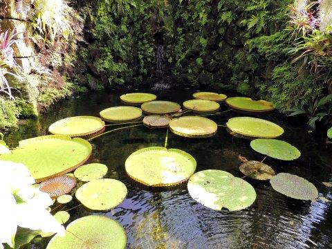Ischia Botanischer Garten La Mortella Seerosenblaetter