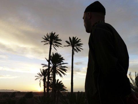 Palmenrausch im Abendlicht