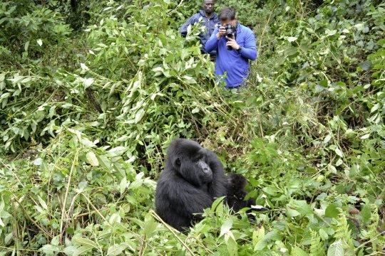 Gorilla Tracking_2