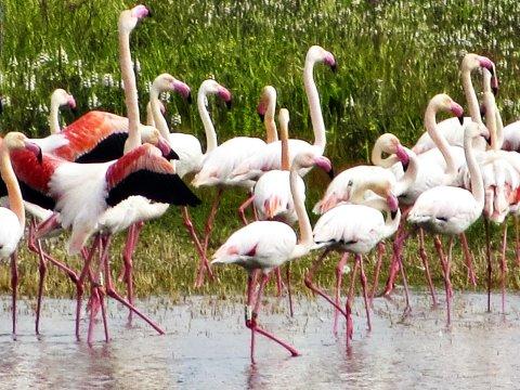 Flamingos im Naturpark Cabo de Gata