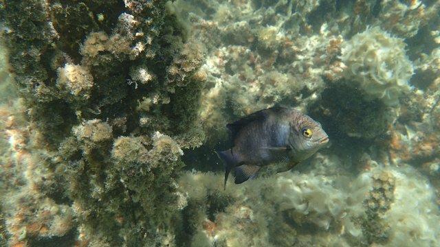 Korallen und Fisch