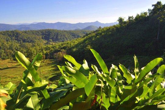 Blick vom Homestay in Nordthailand