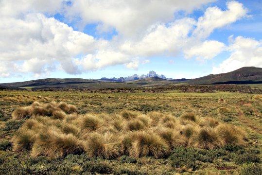 Mt Kenya Tussokgras_2