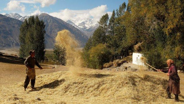 Feldarbeit in Ratm im Wakhan-Kooridor