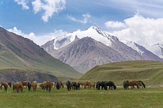 Pferdeherde im Tien Shan_2