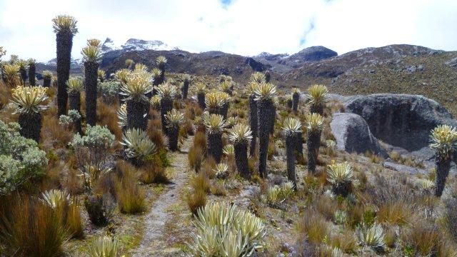 Kolumbien Trekking Los Nevados Torsten Krempin_2
