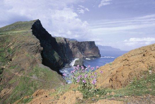 Klippen an Madeiras Küste