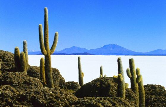 Insel Incahuasi Salar de Uyuni 2