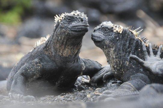 AMS_KSC_Galapagos_Meeresechse_2