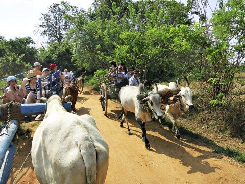 Habarana Begegenung bei der Safari mit dem Ochsenkarren_2
