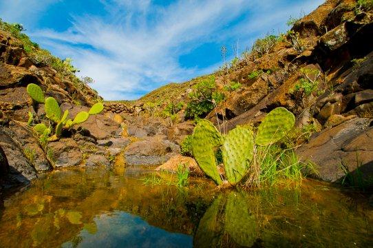 Quelle auf Lanzarote