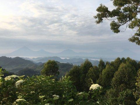 Uganda-Blick-von-Nkuringo-auf-die-Vulkankette-Uganda