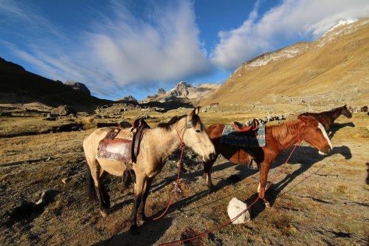 Peru Cordillera Huayhuash Esel