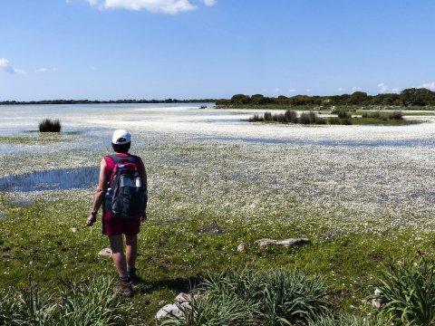 Sumpfgebiet bei Giara