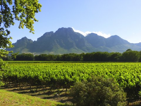 Suedafrika Winelands Franschhoek Wine Estate