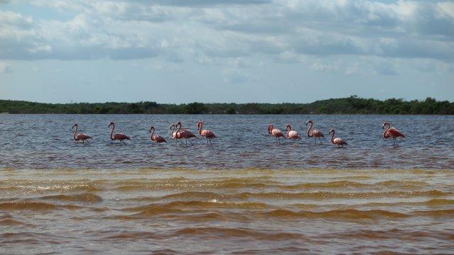 Rio_Largartos_Flamingotour