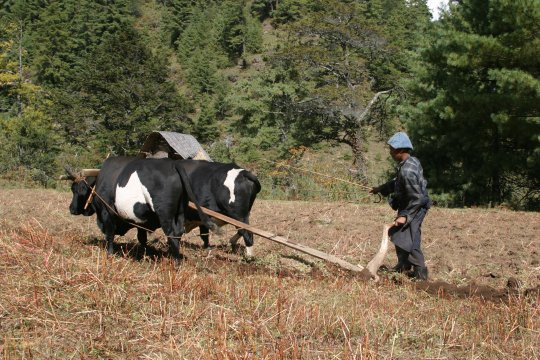 Bauer bei Feldarbeit in Bumthang