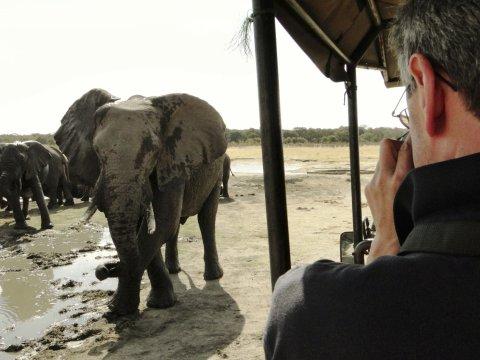 Fotograf Elefant