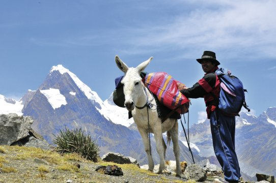 Muli und sein Führer auf Sambuyopass Huayhuash