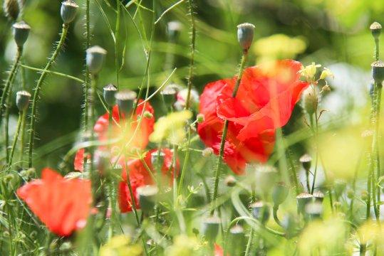Blumenpracht am Wegesrand_2
