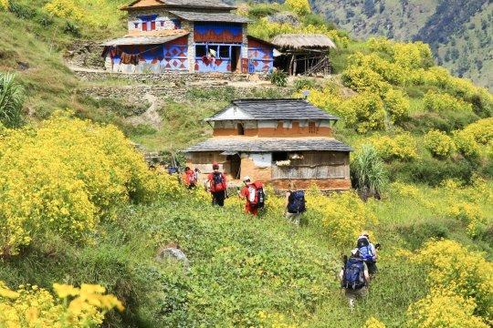 Trekking durch grüne Vegetation