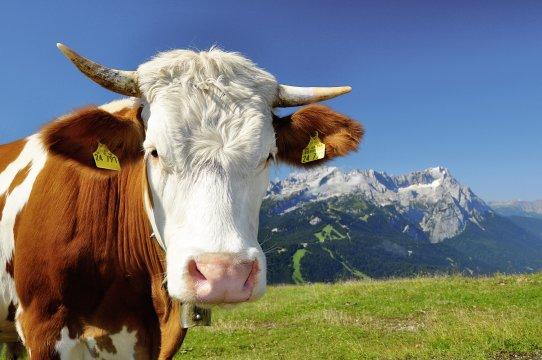 Klettersteigset Zugspitze : Deutschland zugspitze Über das höllental und den gipfel