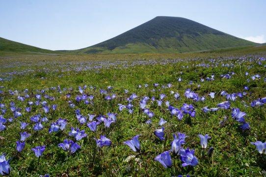 Ghegama Berge Blumen 3