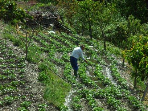 Farmer in den Alpujarras