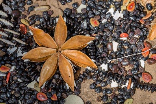 San-Früchte-am-Boden
