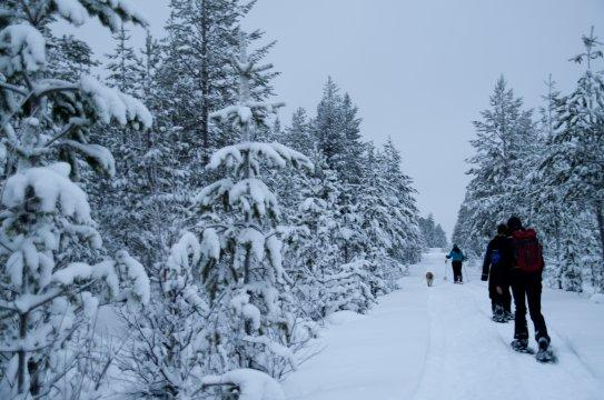 Schneeschuhwanderung in Schwedisch Lappland2