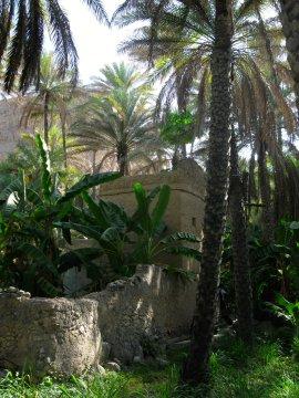 idyllischer Palmenhain_2
