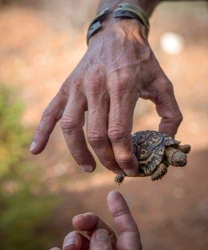 Suedafrika-kleine-Schildkroete