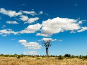 Madagaskar-Baobab