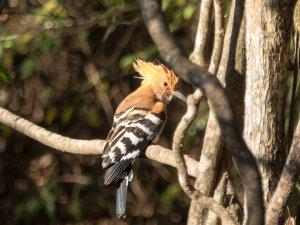 Madagaskar-Isalo-Vogel