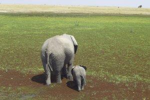 Vater und Sohn im Amboseli Nationalpark