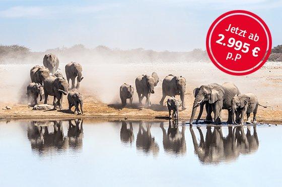 Namibia - Elefantenherde; Foto: Efimova Anna/Shutterstock.com